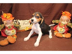 <a href='/pet-recovery/LostPetPosterOnline.aspx?lpid=38327' style='color:white; text-decoration:none;'>bullet (Beagle)<br/>orlando, FL</a>