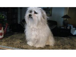<a href='/pet-recovery/LostPetPosterOnline.aspx?lpid=19872' style='color:white; text-decoration:none;'>Sammy (Havanese)<br/>West Branch, MI</a>
