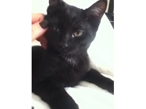 <a href='/pet-recovery/LostPetPosterOnline.aspx?lpid=38314' style='color:white; text-decoration:none;'>Jack (American Shorthair)<br/>Parsippany, NJ</a>