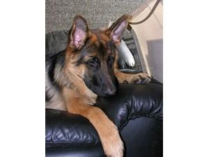 Dog Training Near Butler Pa