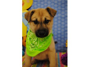 <a href='/pet-recovery/LostPetPosterOnline.aspx?lpid=39133' style='color:white; text-decoration:none;'>Alexio (German Shepherd / Siberian Husky)<br/>Chicago, IL</a>