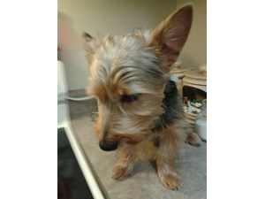 <a href='/pet-recovery/LostPetPosterOnline.aspx?lpid=38491' style='color:white; text-decoration:none;'>Caillou (Yorkshire Terrier)<br/>Pickerington, OH</a>
