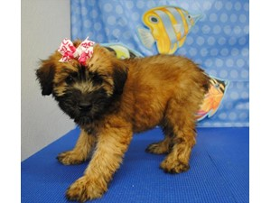 <a href='/pet-recovery/LostPetPosterOnline.aspx?lpid=38426' style='color:white; text-decoration:none;'>Sweetie (Soft Coated Wheaten Terrier)<br/>Elgin, IL</a>