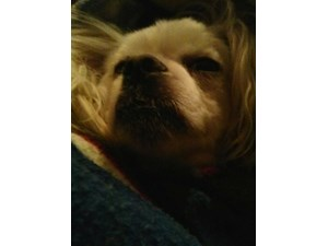 <a href='/pet-recovery/LostPetPosterOnline.aspx?lpid=37671' style='color:white; text-decoration:none;'>Lady (Maltese / Shih Tzu)<br/>west des moines, IA</a>