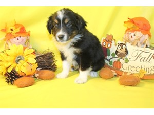 <a href='/pet-recovery/LostPetPosterOnline.aspx?lpid=38329' style='color:white; text-decoration:none;'>Colter (Miniature Australian Shepherd)<br/>Sunset, UT</a>