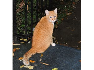 <a href='/pet-recovery/FoundPetPoster.aspx?sighting=19244' style='color:white; text-decoration:none;'> (cat)<br/>Clarence, NY</a>