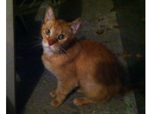 <a href='/pet-recovery/FoundPetPoster.aspx?sighting=19274' style='color:white; text-decoration:none;'> (cat)<br/>Madison, OH</a>