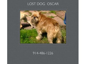 <a href='/pet-recovery/LostPetPosterOnline.aspx?lpid=38143' style='color:white; text-decoration:none;'>Oscar (Brussels Griffon)<br/>Yonkers, NY</a>