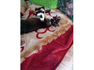 <a href='/pet-recovery/LostPetPosterOnline.aspx?lpid=38141' style='color:white; text-decoration:none;'>Cody (Siamese)<br/>Port St lucie, FL</a>