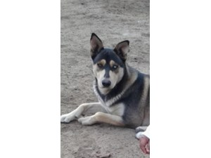 <a href='/pet-recovery/LostPetPosterOnline.aspx?lpid=38145' style='color:white; text-decoration:none;'>Fox (Siberian Husky)<br/>Bakersfield, CA</a>