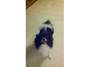<a href='/pet-recovery/LostPetPosterOnline.aspx?lpid=38146' style='color:white; text-decoration:none;'>Randi (Pomeranian)<br/>Crestview, FL</a>