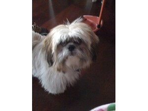 <a href='/pet-recovery/LostPetPosterOnline.aspx?lpid=38147' style='color:white; text-decoration:none;'>Chloe (Shih Tzu)<br/>Philadelphia, PA</a>