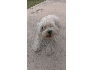 <a href='/pet-recovery/FoundPetPoster.aspx?sighting=19301' style='color:white; text-decoration:none;'> (dog)<br/>San Antonio, TX</a>