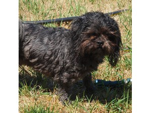 <a href='/pet-recovery/LostPetPosterOnline.aspx?lpid=38157' style='color:white; text-decoration:none;'>Buster (Shih Tzu)<br/>muskegon, MI</a>