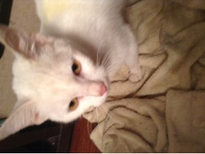 <a href='/pet-recovery/FoundPetPoster.aspx?sighting=19308' style='color:white; text-decoration:none;'>long hair (cat)<br/>Charlotte, NC</a>