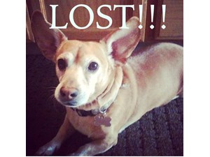 <a href='/pet-recovery/LostPetPosterOnline.aspx?lpid=38176' style='color:white; text-decoration:none;'>Dash (Chihuahua / Dachshund)<br/>modesto, CA</a>
