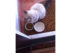 <a href='/pet-recovery/FoundPetPoster.aspx?sighting=19321' style='color:white; text-decoration:none;'>dlh (cat)<br/>Salinas, CA</a>