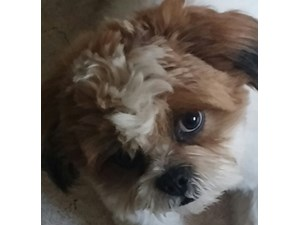 <a href='/pet-recovery/FoundPetPoster.aspx?sighting=19325' style='color:white; text-decoration:none;'>Lhasa Apso (dog)<br/>albuquerque, NM</a>