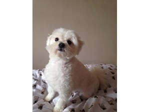 <a href='/pet-recovery/LostPetPosterOnline.aspx?lpid=38184' style='color:white; text-decoration:none;'>Sparky (Maltese)<br/>Elgin, IL</a>