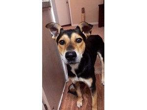 <a href='/pet-recovery/FoundPetPoster.aspx?sighting=19326' style='color:white; text-decoration:none;'>Shepherd mix (Dog)<br/>North Richland Hills, TX</a>
