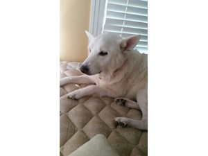 <a href='/pet-recovery/LostPetPosterOnline.aspx?lpid=38210' style='color:white; text-decoration:none;'>Charlene (Mixed)<br/>Monroe, LA</a>