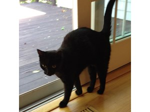 <a href='/pet-recovery/LostPetPosterOnline.aspx?lpid=38216' style='color:white; text-decoration:none;'>Smudge (Domestic Short Hair)<br/>Chatham Township, NJ</a>