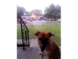 <a href='/pet-recovery/FoundPetPoster.aspx?sighting=19351' style='color:white; text-decoration:none;'>Germany Shepard mix (dog)<br/>Murfreesboro, TN</a>