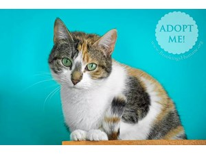 <a href='/pet-recovery/LostPetPosterOnline.aspx?lpid=38215' style='color:white; text-decoration:none;'>Camelia (Calico)<br/>Brookings, SD</a>