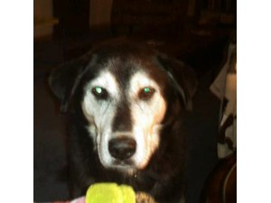 <a href='/pet-recovery/LostPetPosterOnline.aspx?lpid=38239' style='color:white; text-decoration:none;'>Rufus aka Lucky (Husky Mix)<br/>litchfield, OH</a>