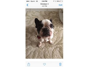 <a href='/pet-recovery/LostPetPosterOnline.aspx?lpid=38242' style='color:white; text-decoration:none;'>Dora (French Bulldog)<br/>miami, FL</a>