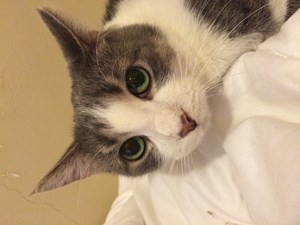 <a href='/pet-recovery/LostPetPosterOnline.aspx?lpid=38252' style='color:white; text-decoration:none;'>Willow (Mixed Breed Cat)<br/>Lakewood, OH</a>