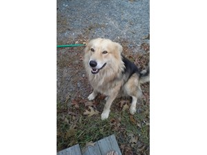 <a href='/pet-recovery/FoundPetPoster.aspx?sighting=19383' style='color:white; text-decoration:none;'>collie/shepherd? (DOG)<br/>little rock, AR</a>