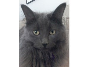 <a href='/pet-recovery/LostPetPosterOnline.aspx?lpid=38273' style='color:white; text-decoration:none;'>Juno (Domestic Long Hair)<br/>Westland, MI</a>