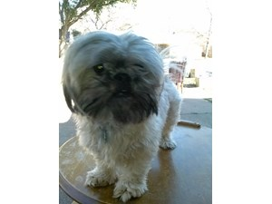 <a href='/pet-recovery/LostPetPosterOnline.aspx?lpid=38271' style='color:white; text-decoration:none;'>Nicodemus (Shih Tzu)<br/>Hurst, TX</a>