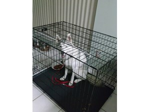 <a href='/pet-recovery/FoundPetPoster.aspx?sighting=19403' style='color:white; text-decoration:none;'>Siberian Husky (Dog)<br/>katy, TX</a>