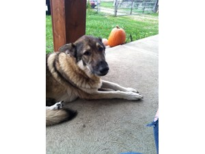 <a href='/pet-recovery/LostPetPosterOnline.aspx?lpid=38284' style='color:white; text-decoration:none;'>Miley (German Shepherd)<br/>columbus, OH</a>