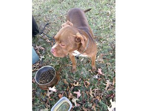 <a href='/pet-recovery/FoundPetPoster.aspx?sighting=19410' style='color:white; text-decoration:none;'>Pit Bull (dog)<br/>Roswell, GA</a>