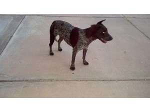 <a href='/pet-recovery/FoundPetPoster.aspx?sighting=19417' style='color:white; text-decoration:none;'>lab&greyhound (dog)<br/>Glendale, AZ</a>