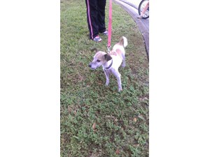 <a href='/pet-recovery/FoundPetPoster.aspx?sighting=19418' style='color:white; text-decoration:none;'>unkown (Dog)<br/>coral springs, FL</a>