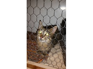 <a href='/pet-recovery/FoundPetPoster.aspx?sighting=19420' style='color:white; text-decoration:none;'>DSH (cat)<br/>Greenville, WI</a>