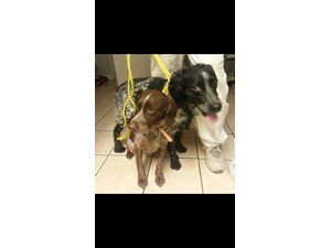 <a href='/pet-recovery/FoundPetPoster.aspx?sighting=19421' style='color:white; text-decoration:none;'>Unknown (Dogs)<br/>Citrus Heights, CA</a>
