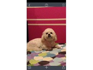 <a href='/pet-recovery/FoundPetPoster.aspx?sighting=19422' style='color:white; text-decoration:none;'>poodle mix (dog)<br/>las vegas, NV</a>