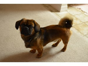 <a href='/pet-recovery/LostPetPosterOnline.aspx?lpid=38325' style='color:white; text-decoration:none;'>Chewy (Puggle)<br/>San Antonio, TX</a>