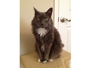 <a href='/pet-recovery/LostPetPosterOnline.aspx?lpid=38332' style='color:white; text-decoration:none;'>Claire/Kitty (Domestic Long Hair)<br/>lake balboa, CA</a>