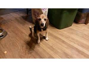 <a href='/pet-recovery/FoundPetPoster.aspx?sighting=19451' style='color:white; text-decoration:none;'>beagle (dog)<br/>Gordo, AL</a>