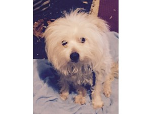 <a href='/pet-recovery/FoundPetPoster.aspx?sighting=19471' style='color:white; text-decoration:none;'> (dog)<br/>Clarkston, MI</a>