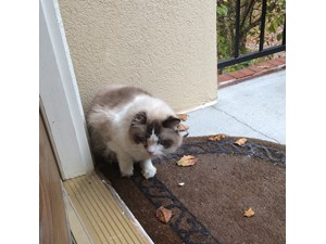 <a href='/pet-recovery/FoundPetPoster.aspx?sighting=19486' style='color:white; text-decoration:none;'>Domestic Long Hair (Cat)<br/>Dunwoody, GA</a>