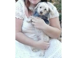 <a href='/pet-recovery/FoundPetPoster.aspx?sighting=19487' style='color:white; text-decoration:none;'>Yorkshire Terrier (dog)<br/>Minneapolis, MN</a>