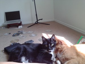 <a href='/pet-recovery/LostPetPosterOnline.aspx?lpid=38451' style='color:white; text-decoration:none;'>Charlie Murphy (Domestic Short Hair)<br/>taylorsville, UT</a>