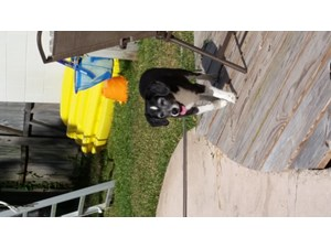 <a href='/pet-recovery/FoundPetPoster.aspx?sighting=19488' style='color:white; text-decoration:none;'>unknown (dog)<br/>Maitland, FL</a>